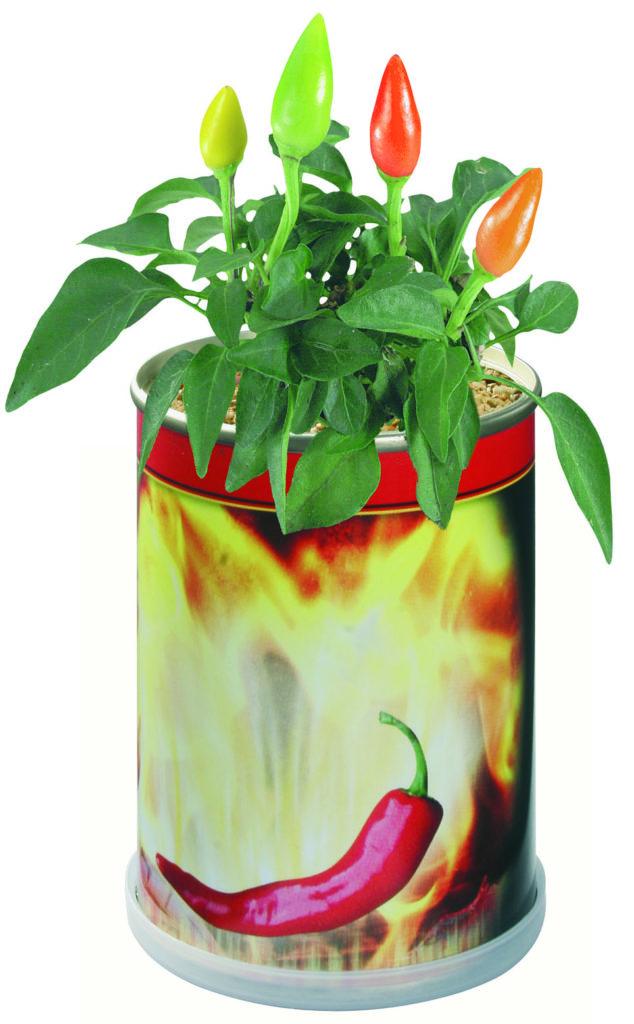 Chilli papričky v reklamní plechovce