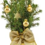 Zlatý vánoční stromek